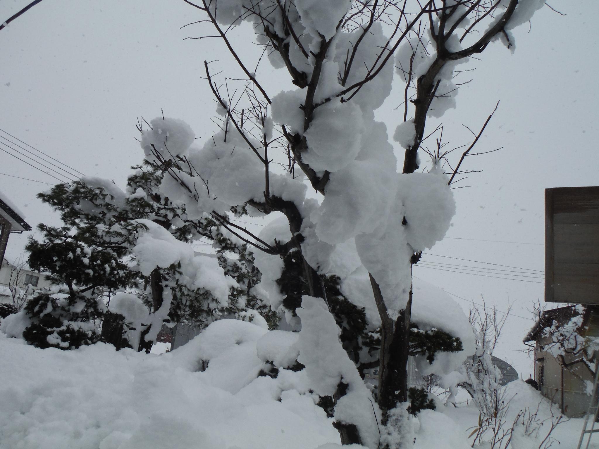 15/3/12 大雪2