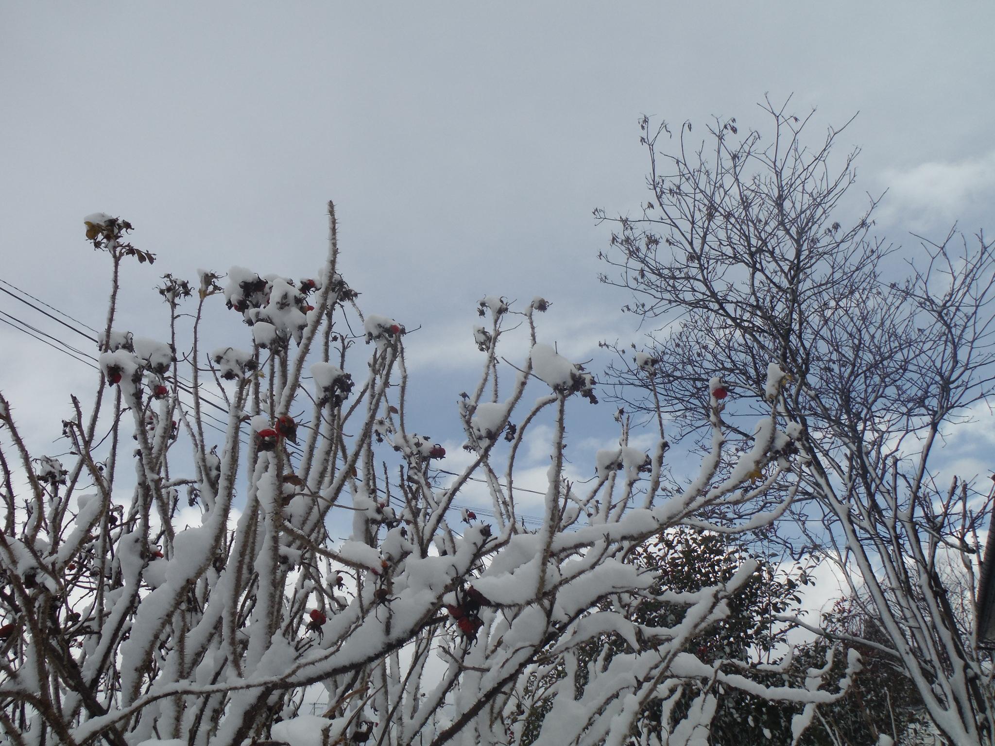 16/12/28 雪2