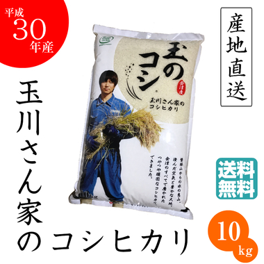 玉のコシ10kg